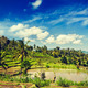 Green rice terraces - PhotoDune Item for Sale