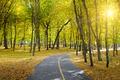Rays of sun in autumn park - PhotoDune Item for Sale