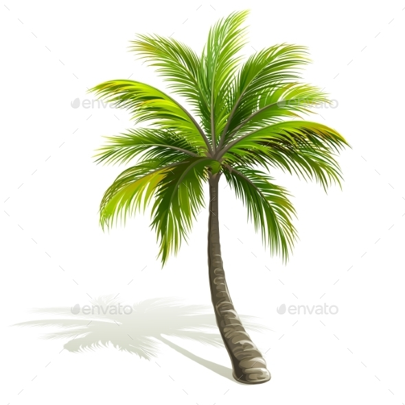 GraphicRiver Palm Tree 11301017