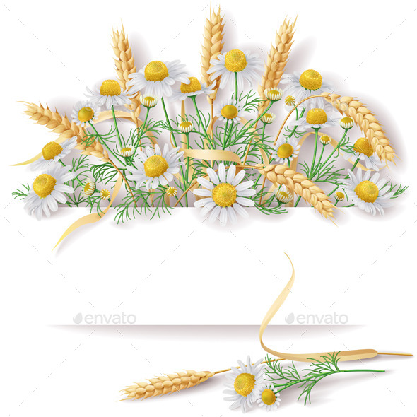 GraphicRiver Banner with Wild Chamomile and Wheat Ears Bunch 11301611