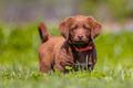 Little dog in the garden - PhotoDune Item for Sale
