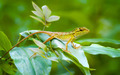 Curious, Wild, Forest Lizard Keeping Watch in Thailand - PhotoDune Item for Sale