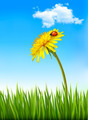 Dandelion on a blue sky and green grass background with a ladybug.  - PhotoDune Item for Sale