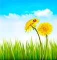 Two yellow dandelions with a ladybug on a nature spring background. - PhotoDune Item for Sale