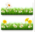 Two nature banners with colorful spring flowers with ladybug - PhotoDune Item for Sale