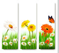 Summer nature banners with colorful flowers and butterfly. - PhotoDune Item for Sale