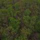 Aerial Tree Top Fly Over - VideoHive Item for Sale