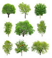 Great collection of deciduous trees  - PhotoDune Item for Sale