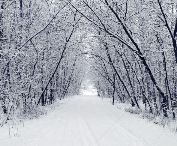 Stock Photo - PhotoDune Winter 1134055