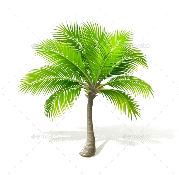 GraphicRiver Palm Tree 11319095