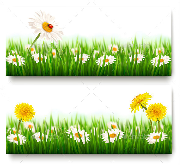 GraphicRiver Nature Banners With Colorful Summer Flowers 11317397