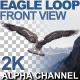 Eagle Flying At Camera - VideoHive Item for Sale