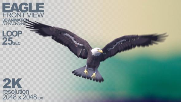 Eagle Flying At Camera