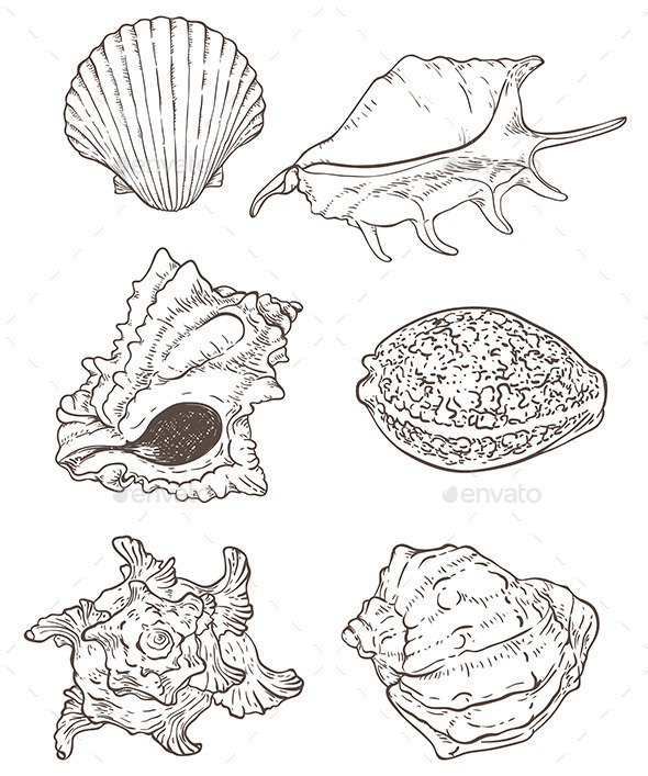 GraphicRiver Set of Sea Shells 11323600