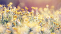 Abstract background with yellow buttercups. - PhotoDune Item for Sale