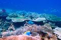 Coral reef at Maldives - PhotoDune Item for Sale