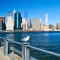 Seagull with Manhattan in background. Focus on the bird. - PhotoDune Item for Sale