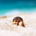 Hermit crab at beach - PhotoDune Item for Sale