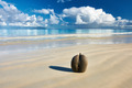 Sea's coconuts (coco de mer) on beach at Seychelles - PhotoDune Item for Sale