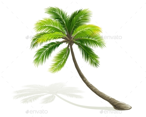 GraphicRiver Palm Tree 11327884