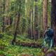 Redwood Hiking - PhotoDune Item for Sale