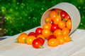 Small Red and Yellow tomato. - PhotoDune Item for Sale