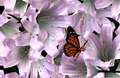 Floral Background with Butterfly - PhotoDune Item for Sale