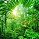 Fresh green rainforest - PhotoDune Item for Sale