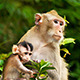 Monkey with Baby 02 - VideoHive Item for Sale