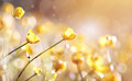 Background with yellow flowers of a buttercup - PhotoDune Item for Sale