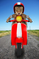 funny cat driving a moped - PhotoDune Item for Sale