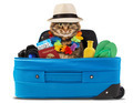 funny cat going on vacation - PhotoDune Item for Sale