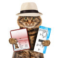 funny cat with passport and airline ticket , isolated on white background - PhotoDune Item for Sale