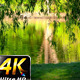 Green Lake and Doves in Nature - VideoHive Item for Sale