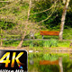 Green Lake and Nature in Park - VideoHive Item for Sale