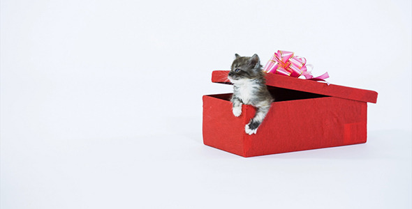 Gray Kitty in a Gift Box