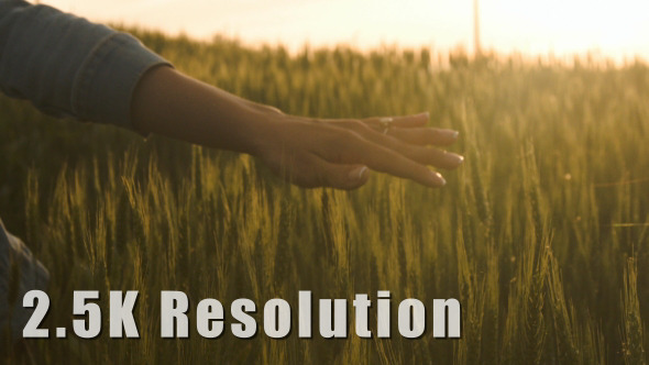 Girl Hand through Wheat Field