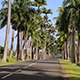 Palm Beach Road - VideoHive Item for Sale