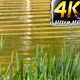 Grass and Lake - VideoHive Item for Sale