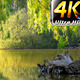 Park in Green Nature - VideoHive Item for Sale