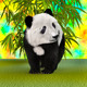 Panda Bear Cub  - PhotoDune Item for Sale