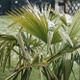 Snow Covered Palms In Spring Season - VideoHive Item for Sale