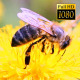 Bee Collects Nectar In The Dandelions 21 - VideoHive Item for Sale