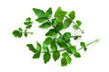 Watercress Isolated on White Background Overhead View - PhotoDune Item for Sale