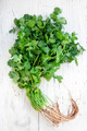 Bunch of Coriander or Cilantro over White Wooden Background - PhotoDune Item for Sale