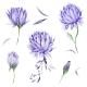 Watercolor Floral Design Elements - GraphicRiver Item for Sale