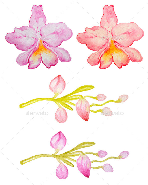 GraphicRiver Pink and Red Orchids 11322602