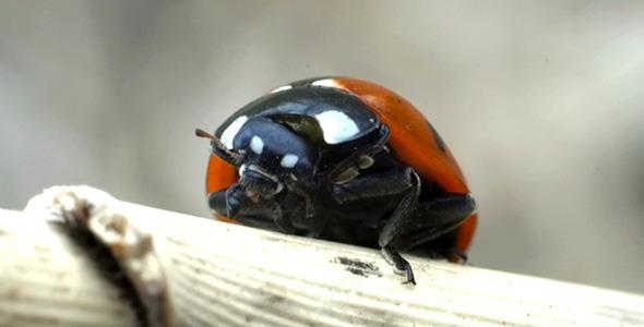 Ladybird Ladybug Bug 4