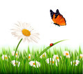 Nature summer daisy flower with butterfly.  - PhotoDune Item for Sale