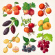 Juicy Colorful Berry Icons - GraphicRiver Item for Sale